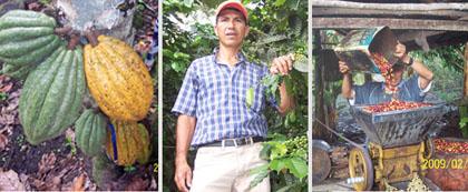 Tomas Perales, ex presidente de la Asociación de Productores Cacaoteros y Cafetaleros del Amazonas, nos envía estas fotos desde Amazonas. Él muestra los productos bandera de su cooperativa: el cacao y el café