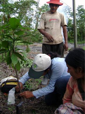 Keyla Figueria acompañada de los socios de la Cooperativa Tocache