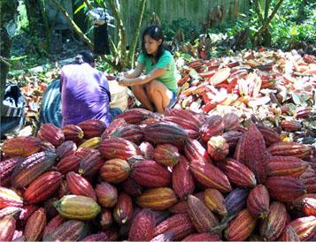 La mujer: elemento clave en el proceso de cosecha