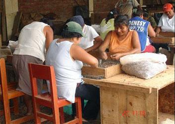 Mujeres participando en la selección de granos de calidad