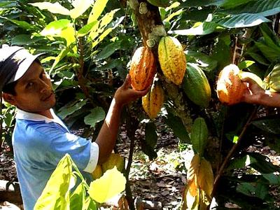 El color de cacao, evidencia de la calidad de sus granos